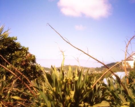 Wellington, Te Whanganui-A-Tara, 惠灵顿